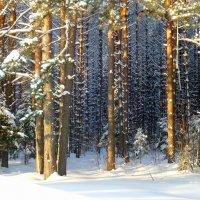 Волшебный лес :: Павлова Татьяна Павлова