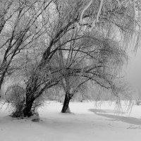 Зимний пейзажъ :: Dr. Olver  ( ОлегЪ )