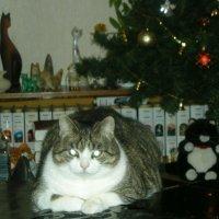 Кошечка под елочкой :: Елена Гуляева (mashagulena)