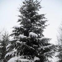 Зима :: BoxerMak Mak
