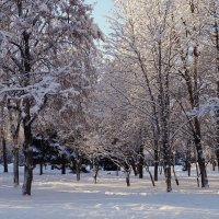 зимнее утро :: Ирина ***