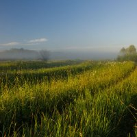 Травы луговые :: Валентин Котляров