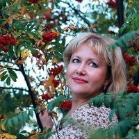 В рябине :: Наталья Лачкова