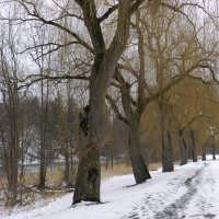 Прогулка вдоль реки... :: Юрий Поляков