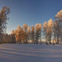 утро на зимней поляне :: Николай Мальцев