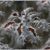 эти зимние цветы-небывалой красоты :: Lena