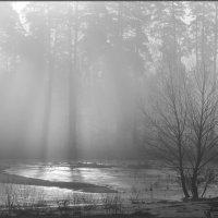 В тумане :: Надежда Лаврова