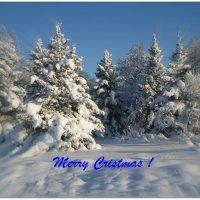 Merry Christmas ! :: laana laadas