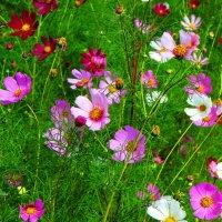 Цветочное лето. :: Антонина Гугаева