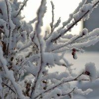 Нежность зимы :: Шухрат Батталов
