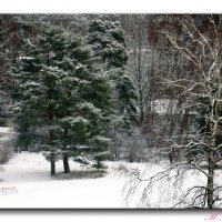 Зима :: Михаил Новиков