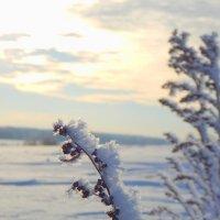 мороз в поле :: Сергей Швечков