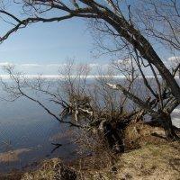 Белое озеро. Май :: dbayrak Дмитрий Байрак