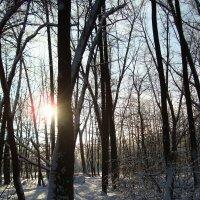 Мороз и солнце; день чудесный! :: Андрей Лукьянов