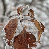 Зима :: Татьяна Кретова