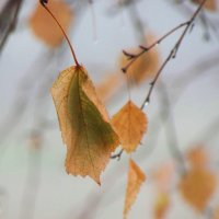 Осенний... :: ЛОРА Субботина