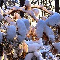 Морозным солнцем не согреть... :: Лесо-Вед (Баранов)