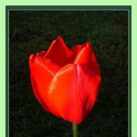 Символ весны. :: Oleg4618 Шутченко