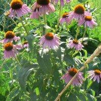 Цветы :: grovs