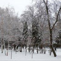 В зимнем парке... :: Тамара (st.tamara)