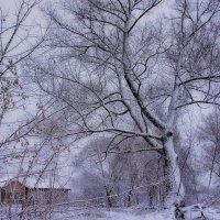 Графика зимы... :: марк