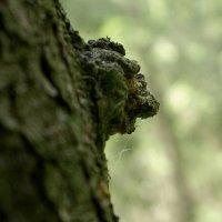 Лесной сторож :: Валерий Талашов