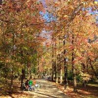 Осень в парке Ривьера. Сочи :: Tata Wolf