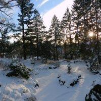 После снегопада в парке Торонто... :: Юрий Поляков