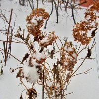 Снегопад,снегопад... :: Milocs Морозова Людмила