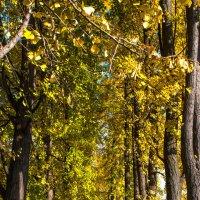 Алея в осень :: Galina Kazakova