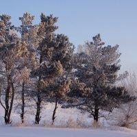 Морозное утро :: Наталия Григорьева