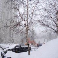 снегом замело... :: Валентина. .