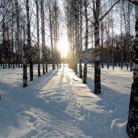 зимняя аллея :: Алексей Логинов