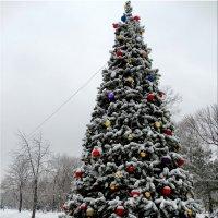 Новогодняя ёлка в парке... :: Тамара (st.tamara)