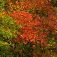 Осень :: Alex Bush
