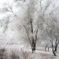 Белая зима :: Natali