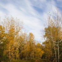 Осень :: Сергей Бажов