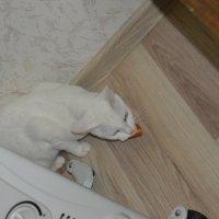 бела защищает вкусняшку :: Маринка Захарова (Антипова)