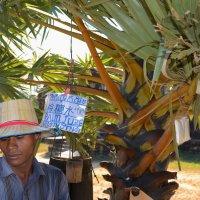 продавец пальмового сока :: Anna Kashkovskaya
