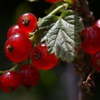 ягода :: геннадий марков