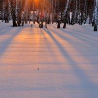 Розовый снег :: Николай Мальцев