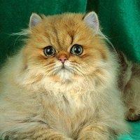 Кошка :: Таньк Сиваева