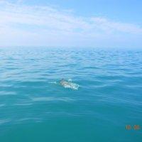 дельфин в открытом море :: Надежда Пономарева (Молчанова)
