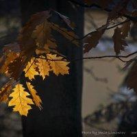 Свет и тень золотой осени :: Евгений Лимонтов