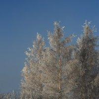 Морозное утро :: Igor Epikhin