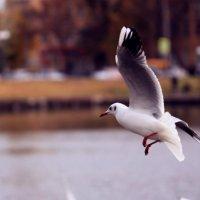 Чайка :: Наталья Босс