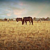 Лошадь :: Светлана Грабовская