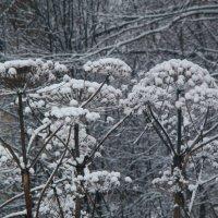 Зимние зонтики :: Ирина Елагина