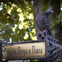Мой путь лежит к храму :: Евгений Лимонтов