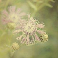 Цветок :: Андрей Дыдыкин